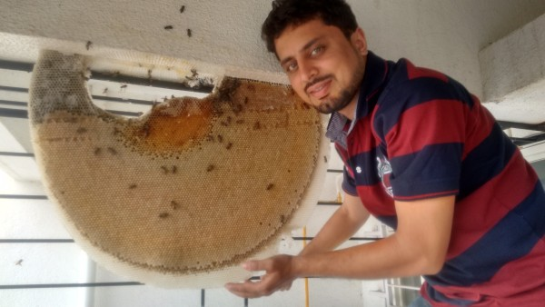 Amit Godse - Saving Honeybees